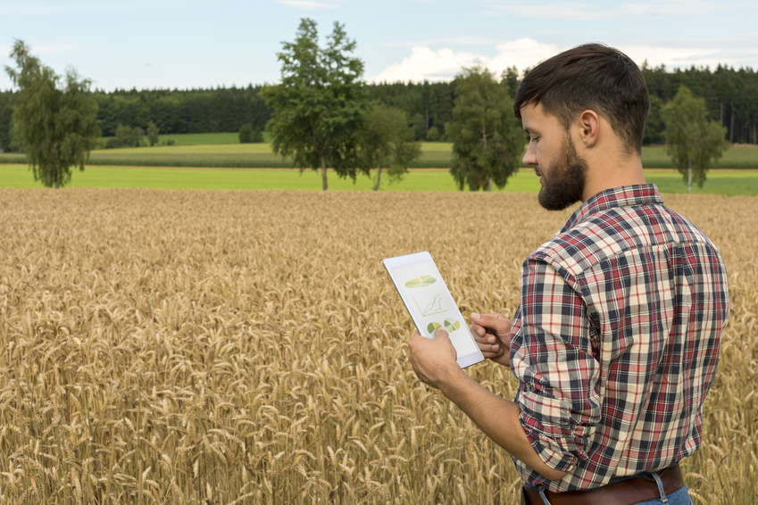 Young farmer with tablet inspecting crop