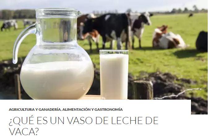 TOP5 - Qué es un vaso de leche de vaca