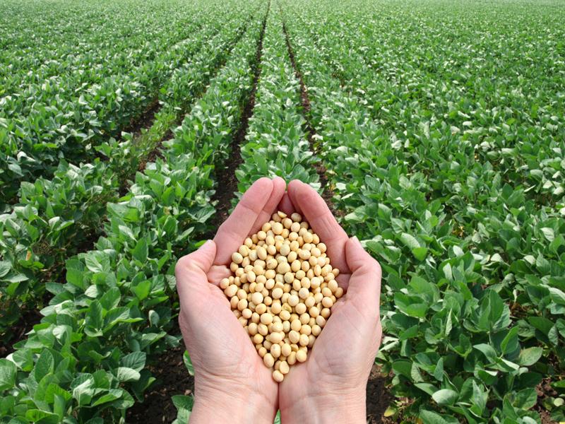 Blockchain transformara la agricultura tal y como la conocemos