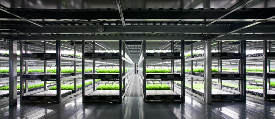 SpreadCo, una granja vertical que produce 100 veces más
