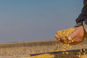 fusiones agrícolas, un libre mercado para 4 gigantes