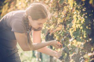 Millenials, la revolución del sector agroalimentario