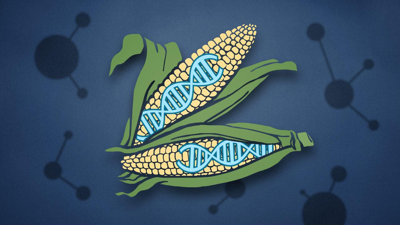 alimentos editados genéticamente - CRISPR