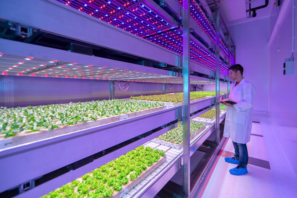 Agricultura-vertical-en-Europa