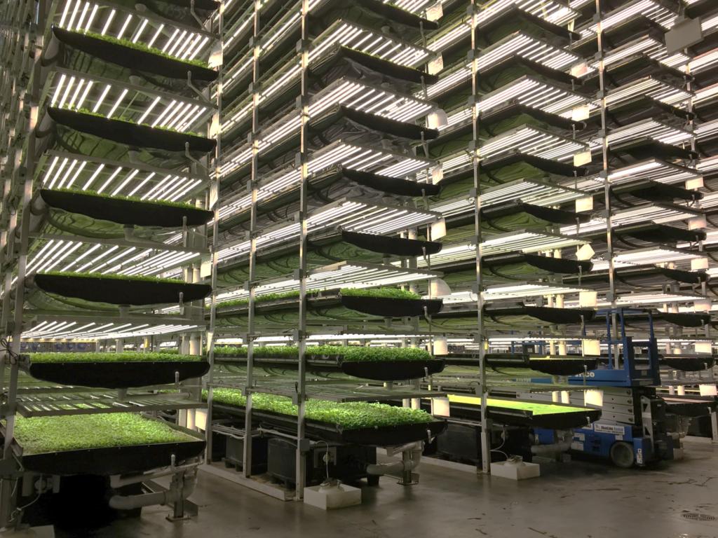 Agricultura Vertical - La Huerta Digital