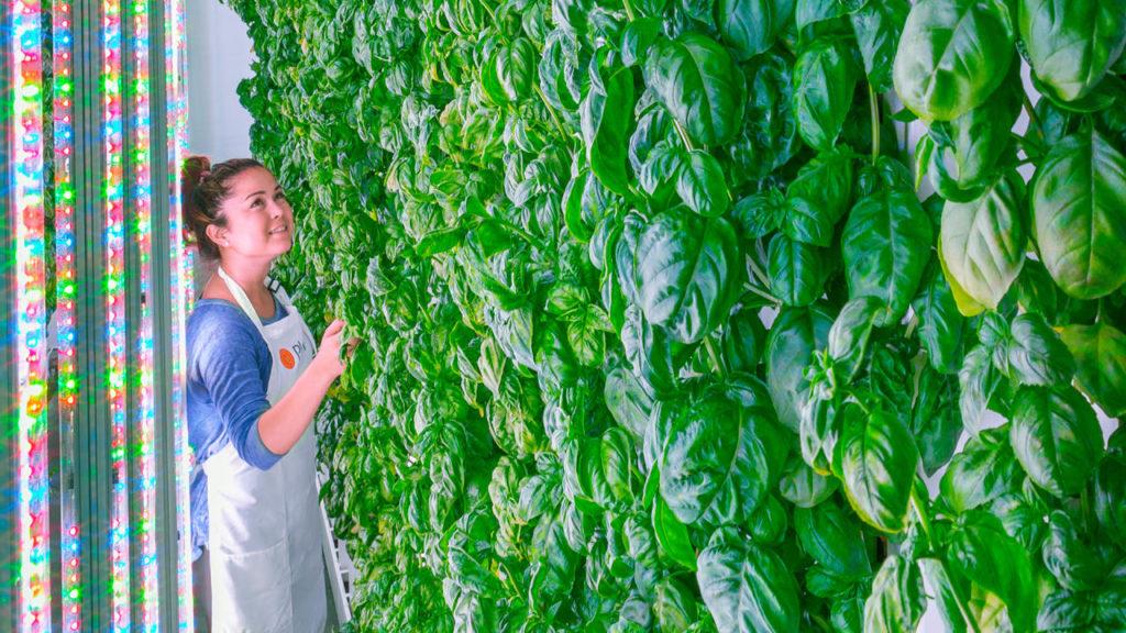 Plenty Farm - La Huerta Digital