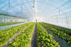 Invernadero 2.0, cuando la sencillez supone un gran ahorro
