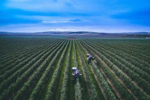 olivetrace-asegurando-la-trazabilidad-del-aceite-de-oliva