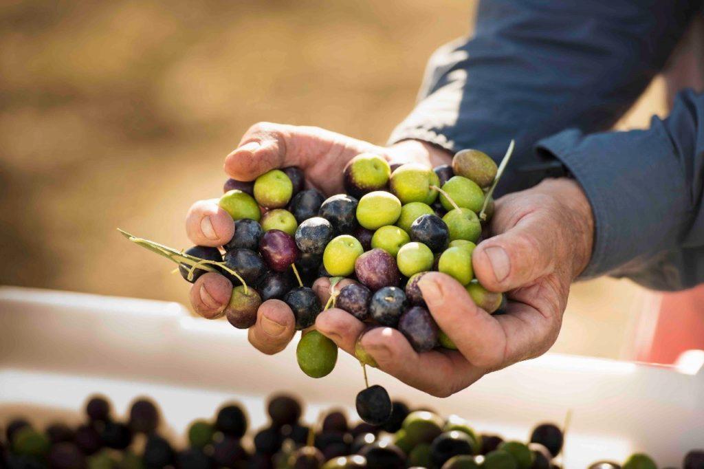 diferentes tipos de olivar en España