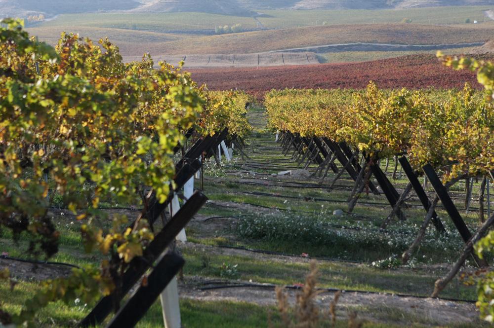 SUEZ Agriculture - Energías renovables en el regadío