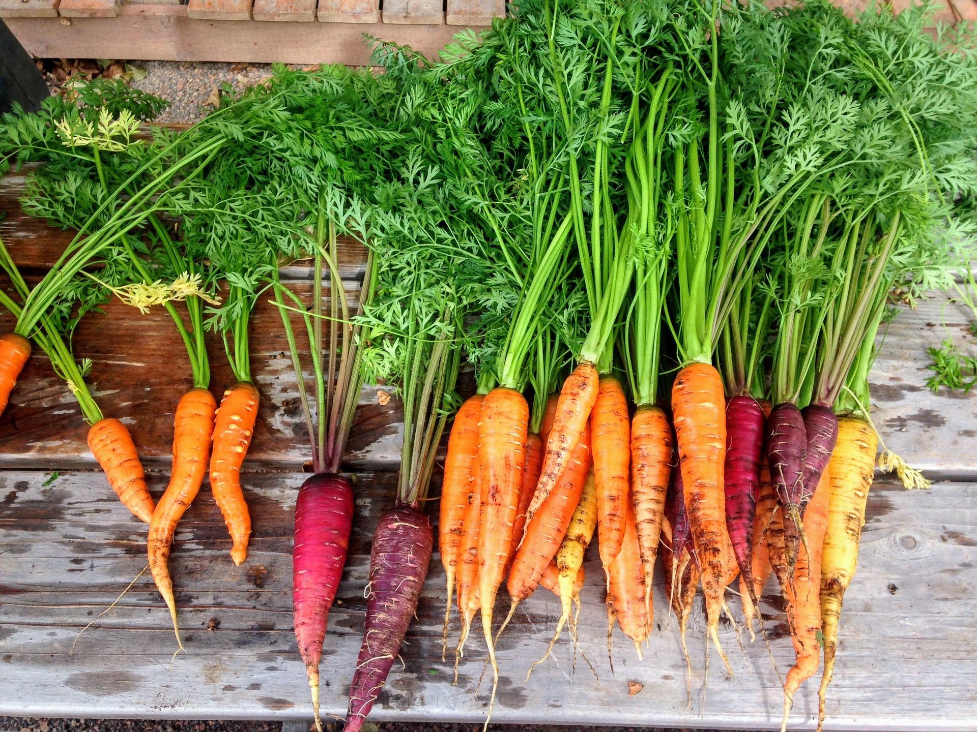 La importancia de la innovación y del desarrollo de proyectos en el sector agroalimentario