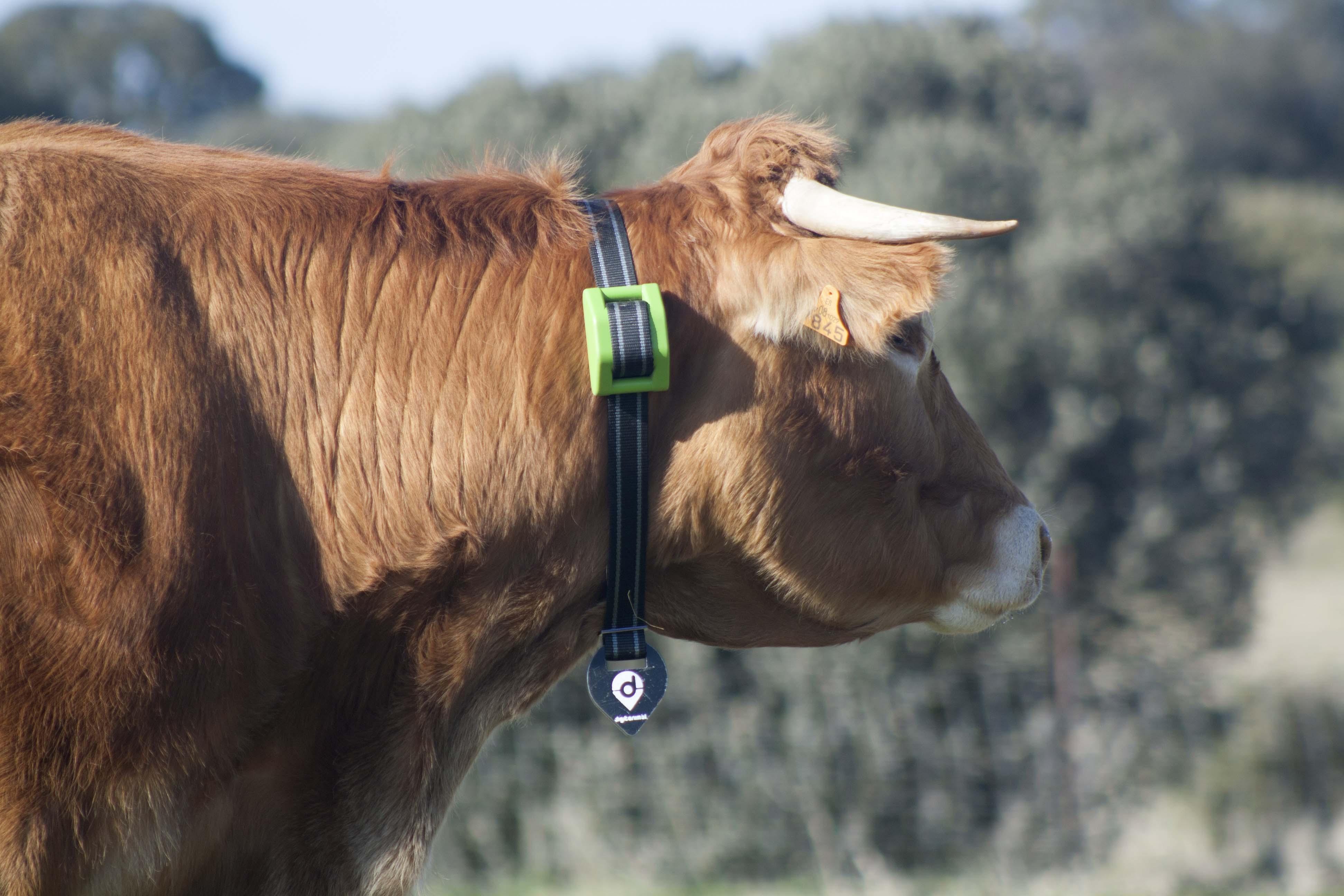 Mejora de la productividad ganadera, trazabilidad y bienestar animal: CATTLEChain
