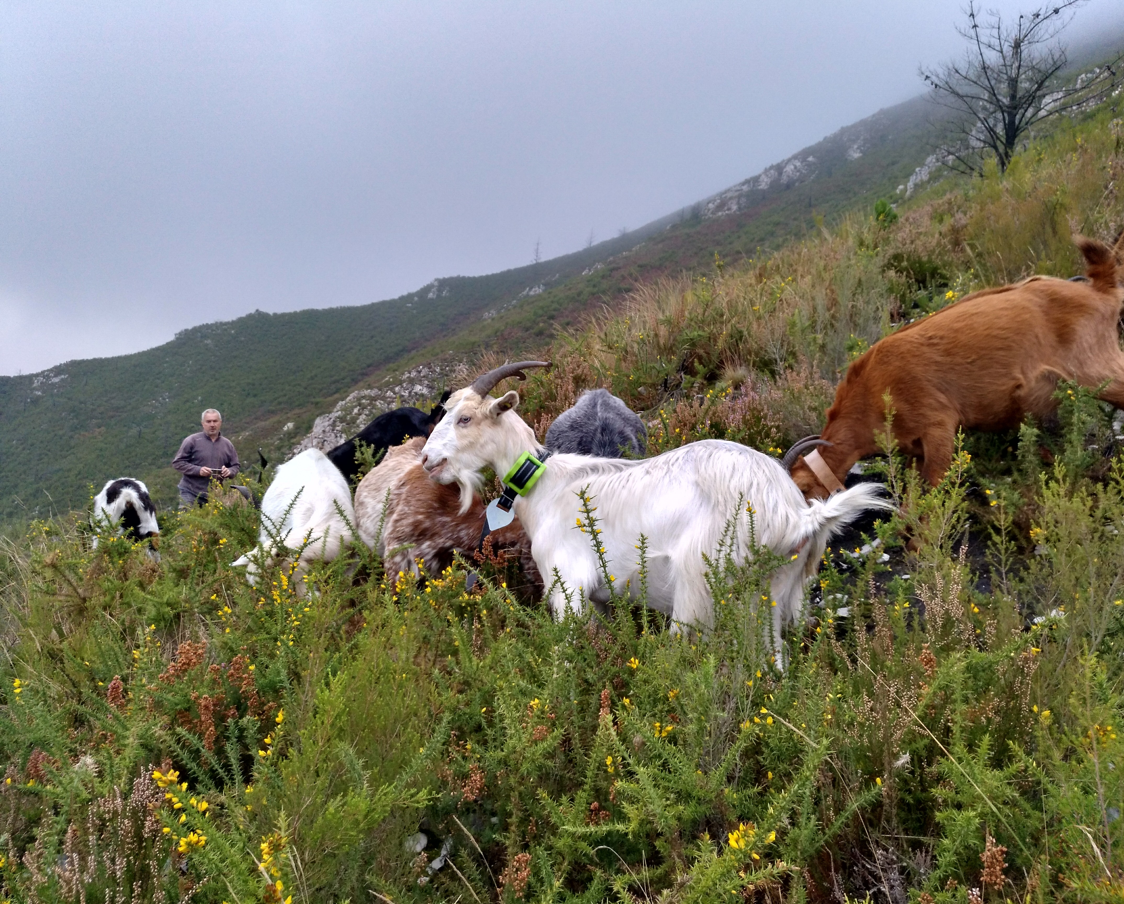 Cattlechain, una iniciativa europea que trata de suprimir la brecha digital entre los ganaderos y los consumidores